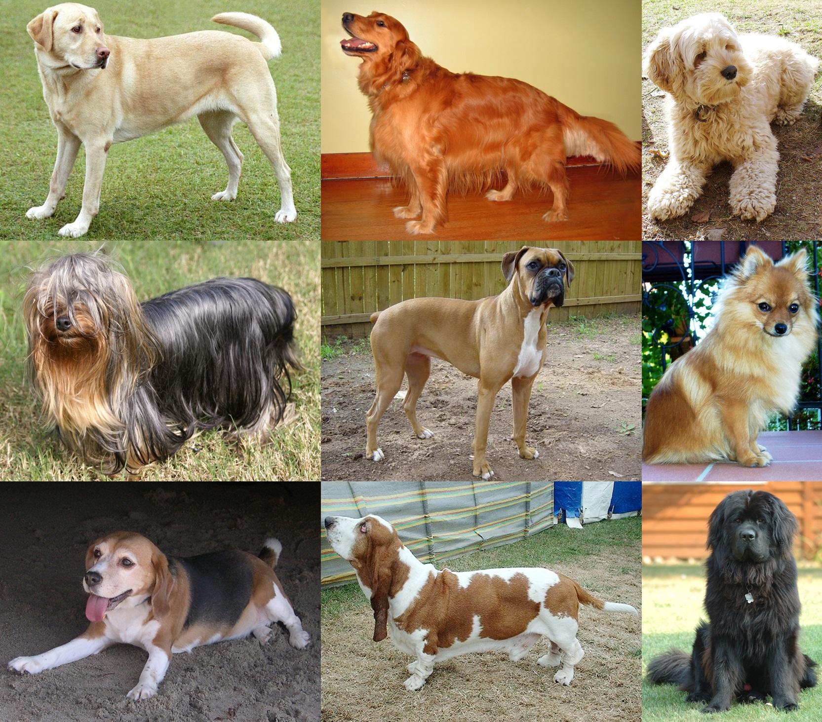 Hundar – Olika hundraser